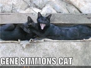 GENE SIMMONS CAT