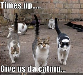 Times up.....  Give us da catnip...