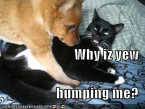 Why iz yew humping me?