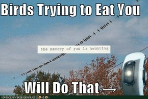 Birds Trying to Eat You  Will Do That →