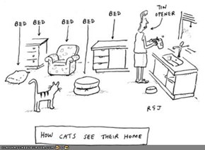 Kitteh Komic of teh Day: How Cats See Their Home