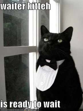 waiter kitteh  is ready to wait