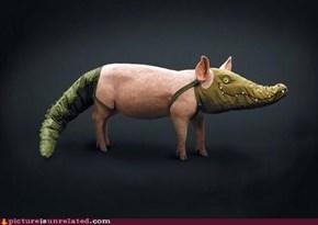 Gator Pig