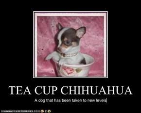 TEA CUP CHIHUAHUA