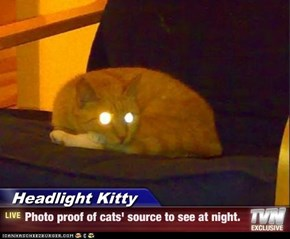 Headlight Kitty - Photo proof of cats' source to see at night.