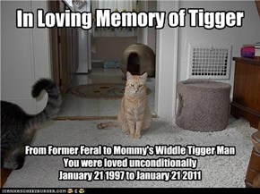 Tigger's Memorial
