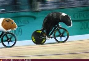 Sweet Race!