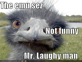 The emu sez Not funny Mr. Laughy man