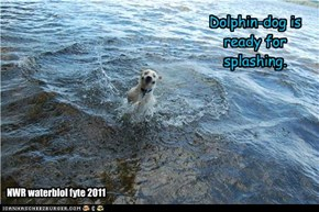 Dolphin-dog is ready for splashing.