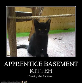 APPRENTICE BASEMENT KITTEH