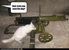 Dear, have you seen the dog?