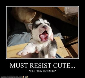 MUST RESIST CUTE...