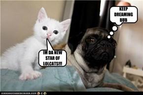 IM DA NEW STAR OF LOLCATS!!!
