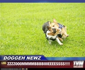 DOGGEH NEWZ - ZZZZOOOMMMMBBBBIIIIEEEESSSS!!!!