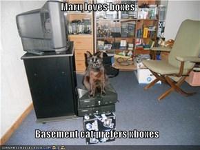 Maru loves boxes  Basement cat prefers xboxes
