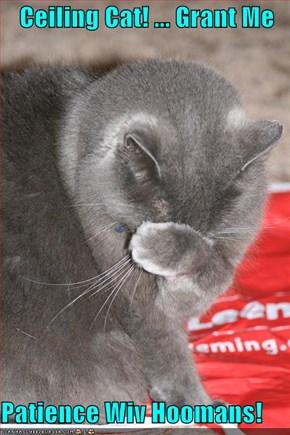 Ceiling Cat! ... Grant Me  Patience Wiv Hoomans!