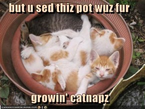 but u sed thiz pot wuz fur  growin' catnapz