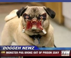 DOGGEH NEWZ  - MONSTER PUG BROKE OUT OF PRISON 2DAY