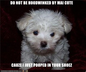 DO NOT BE HOODWINKED BY MAI CUTE   CAUZE I JUST POOPED IN YOUR SHOEZ