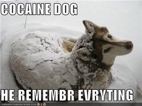 COCAINE DOG  HE REMEMBR EVRYTING