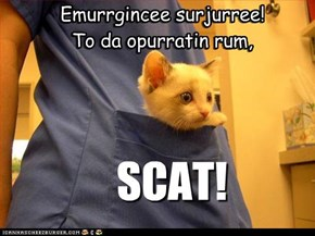 *DR. TINY CAT: ALWUZ ON CAWL!*