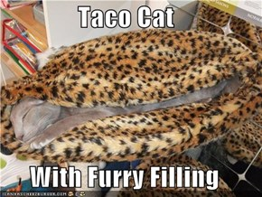 Taco Cat  With Furry Filling