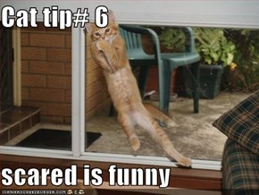 Cat tip# 6   scared is funny