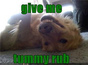 give me   tummy rub
