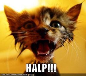 HALP!!!