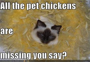 All the pet chickens  are missing you say?