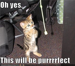 Oh yes.  This will be purrrrfect