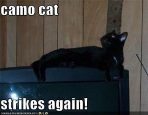 camo cat  strikes again!