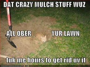 DAT CRAZY MULCH STUFF WUZ ALL OBER               YUR LAWN tuk me hours to get rid uv it
