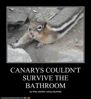 CANARYS COULDN'T SURVIVE THE BATHROOM