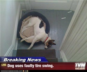 Breaking News - Dog uses faulty tire swing.