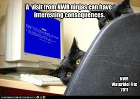 A  visit from NWR ninjas can have   interesting consequences.