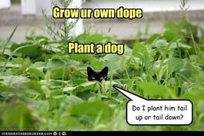 Ai haz a green thum!