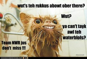 wut's teh rukkus abowt ober there?