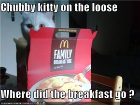 Chubby kitty on the loose  Where did the breakfast go ?