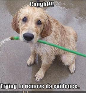 Caught!!