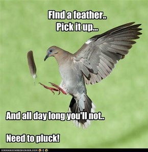 FInd a feather.. Pick it up...