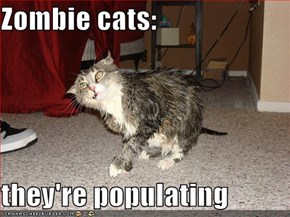 Zombie cats:  they're populating