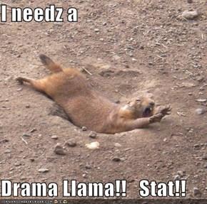 I needz a   Drama Llama!!   Stat!!