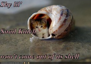 Shy lil' Snail Kitteh won't come out of its shell