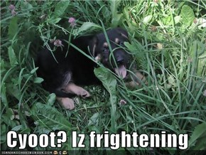 Cyoot? Iz frightening