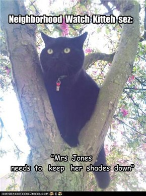 Neighborhood  Watch  Kitteh  sez: