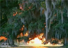 Mother Nature FTW: Louisiana Sunset