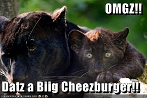 OMGZ!!  Datz a Biig Cheezburger!!
