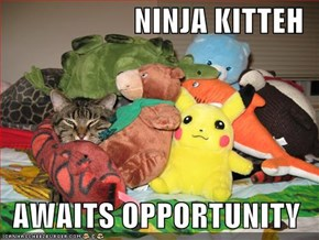 NINJA KITTEH  AWAITS OPPORTUNITY
