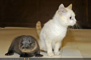 Cyoot Kitteh of teh Day: Dis Iz a Weerd Lewkin' Kitteh...